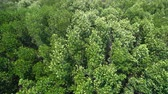 Aerial view of mangroves forest with wind