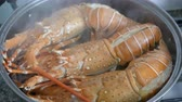 crustacean : steam lobster in iron steamer