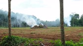 Smoke from burned old trees.Preparing from new plantation concept