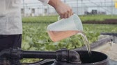 shortage of water : Worker pouring fertelizer in a greenhouse Stock Footage