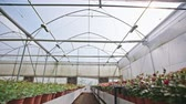 researcher : Wide tracking shot of a large flower greenhouse