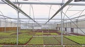 ev idaresi : Aerial footage from inside a large greenhouse with flowers Stok Video