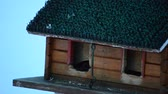 wing : small birds feeding in homemade bird house in winter Stock Footage