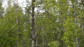 frondoso : vibrant green summer mountain forest and small dirt road camera pan left