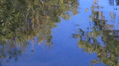 salgueiro : Reflection of tree leaves in the water of a river