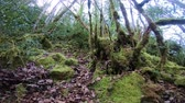 vegetal : moss on tree trunks in pyrenean forest