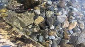 minerais : pebble background under the sea water Stock Footage