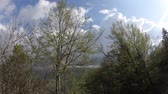 pirineus : Spring forest with shining sun in Pyrenees, Aude in southern of France Vídeos