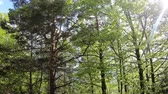 pyrenees : Spring forest with shining sun in Pyrenees, Aude in southern of France Stock Footage