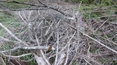 toco : Deforestation of Pyrenean forest in Aude, Southern of France Stock Footage