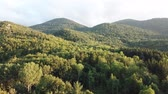 növényzet : Aerial view of pyrenean forest filmed with drone, Aude in southern of France