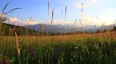 prérie : meadow of flowers and grass in summer and pyrenean landscape at sunset, Occitanie in the south of France Dostupné videozáznamy