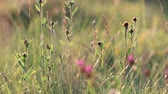 pyrenees : Background of flowers and grass in summer. Pyrenean meadow