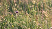 mudas : Background of flowers and grass in summer. Pyrenean meadow