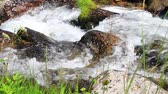 rivet : water flowing in a Pyrenean stream Stock Footage