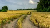 ушки : A dirt road through a field of grain. 4K timelapse.