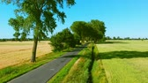 Road among trees and fields. Stock Footage
