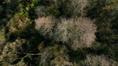 Autumn forest seen from above. Stok Video