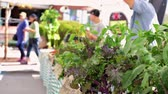 local : Summer farmers market on Main Street in Parker Colorado.