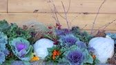 herbaceous : Window flower basket decorated with pumpkins for Autumn. Stock Footage
