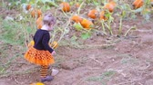 bebês : Toddler in Halloween costume playing at the pumpkin patch.