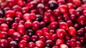 kruhový : Organic fresh cranberries in season.