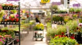 garden flowers : Abundance of colorful flowers at the garden center in Early Summer. Stock Footage