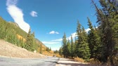 осина : Georgetown, Colorado, USA-September 22, 2016. POV point of view - Driving through alpine forest in the Autumn.