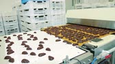 şeker : Candy factory. Chocolate candies lying on conveyor. Stok Video