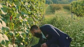 vinařství : Man on vineyard with refractometer