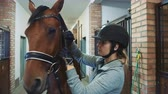 dressage : Young woman tightening bridle on horse.
