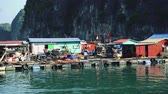 tekne : Floating Fishing Village In The Ha Long Bay. Cat Ba Island, Vietnam Stok Video