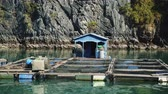 ilhas : Floating Fishing Village In The Ha Long Bay. Cat Ba Island, Vietnam.