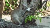 pivo : Funny Monkey Drinking beer On Beach under a tree