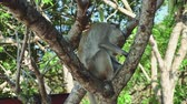 opice : Monkey sitting on tree