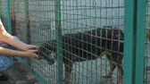 дворняжка : Girl volunteer in the nursery for dogs. Shelter for stray dogs