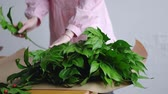 sorts : Female florist sorts out greens for a bouquet on kraft paper Stock Footage