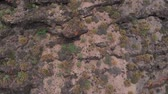 scenérie : Aerial view - camera falls on a rock of volcanic origin, Tenerife, Spain