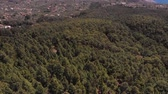 scenérie : Pine forest, aerial view, Tenerife