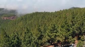 scenérie : Breathtaking aerial view - a very dense forest of pine trees, a road in the clouds and an observation deck on the island of Tenerife