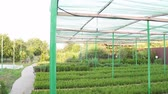irrigação : Growing cultivated seedlings on a small farm, under an artificial green tent Vídeos