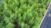 crescido : Rows of ornamental and coniferous plants on a large plant-growing farm