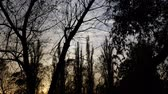 yaprak döken : The gloomy silhouettes of tree branches before nightfall. Scary background for Halloween
