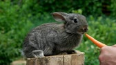 feed back : Lapin. l'alimentation des animaux