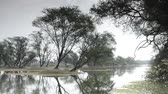 wetland : beautiful lake in the Keolado National Park, India