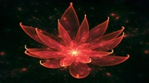 zen like : Lotus Water Lily, Enlightenment or Meditation and Universe, Magic scene - Space flower, fairy dust and universe, tranquil  scene, serene  motion on black background, animated abstract illustration, 30fps, HD1080, seamless loop
