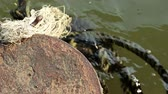 tutturmak : Abandoned rusted old metal mooring post and floating old thick ropes on green muddy water Stok Video