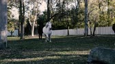 horse face : Horses in the paddock during the day Stock Footage