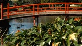 avustralya : Japanese Gardens in Darling Heights, Toowoomba, Queensland on a beautiful sunny day.