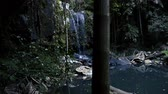 Curtis Falls waterfall located in the Joalah Section of Tamborine National Park which is apart of the Gold Coast Hinterland, Queensland. Стоковые видеозаписи